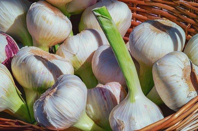 День любителей чеснока (Garlic Lovers Day)