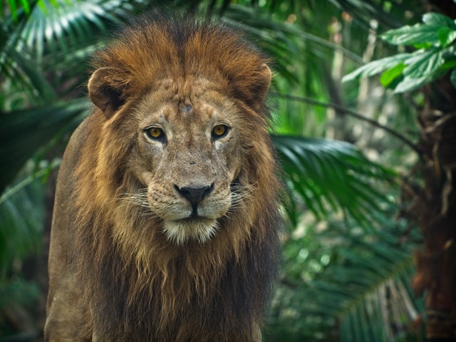 День лева