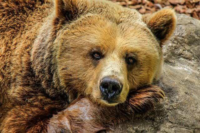 Евтропиев день (Медвежье пробуждение)