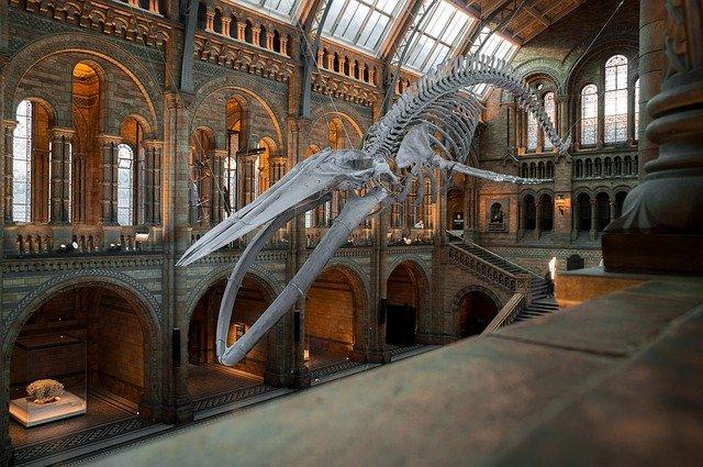 Міжнародний день музеїв (International Museum Day)