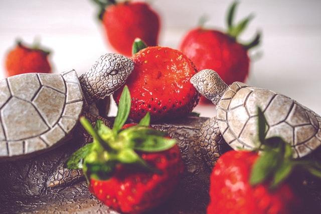 День поддержки черепах (Turtle Adoption Day)