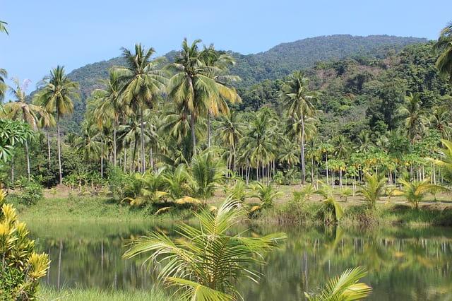 Всемирный день тропического леса (World Rainforest Day)