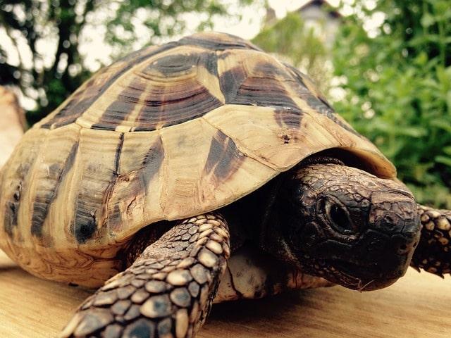 Всемирный день черепах (World Turtle Day)