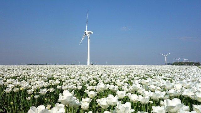 Всемирный день ветра (Global Wind Day)