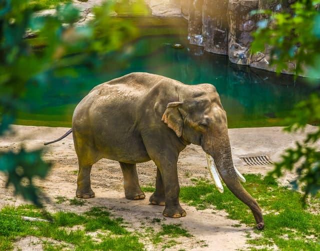 Всемирный день слонов или «Слоноуин»