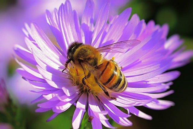 Всемирный день пчёл (World Bee Day)