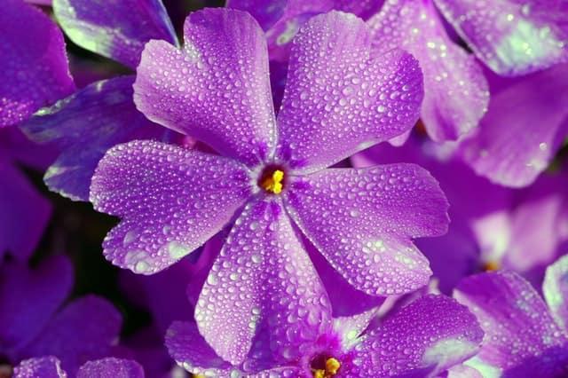 «Фиолетовый день» или Всемирный день больных эпилепсией