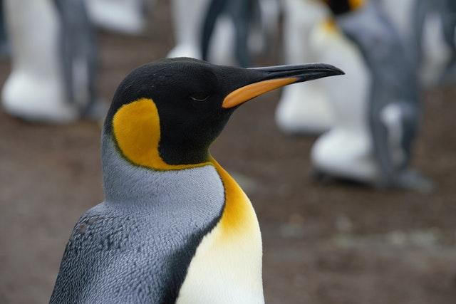 Всемирный день пингвинов (World Penguin Day)