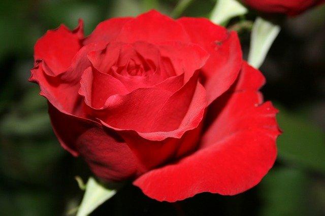 День национального цветка (National Flower Day) в США