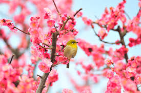 Праздник начала весны (Риссюн) – Япония