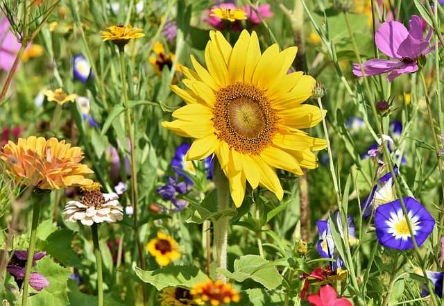 Международный день признательности растениям (International Plant Appreciation Day)