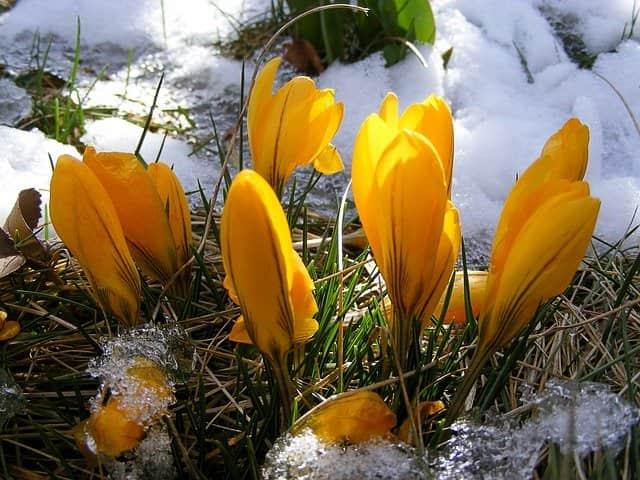 Закликання Весни