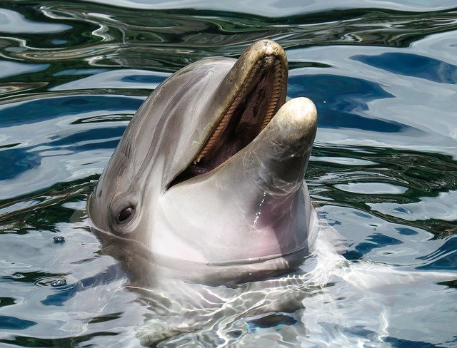 Национальный день дельфинов (National Dolphin Day) - США