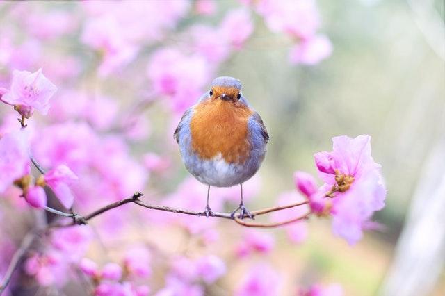 Пролетье (Проводы весны)