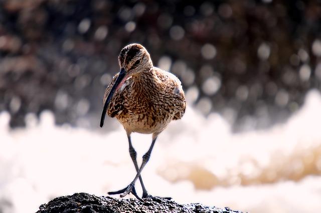 Всемирный день кроншнепа (World Curlew Day)