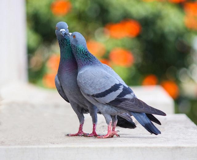 Міжнародний день птахів (Всесвітній день птахів)
