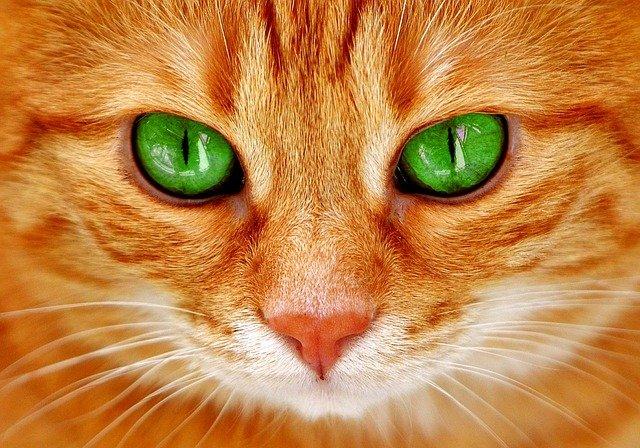День апельсиновых котов