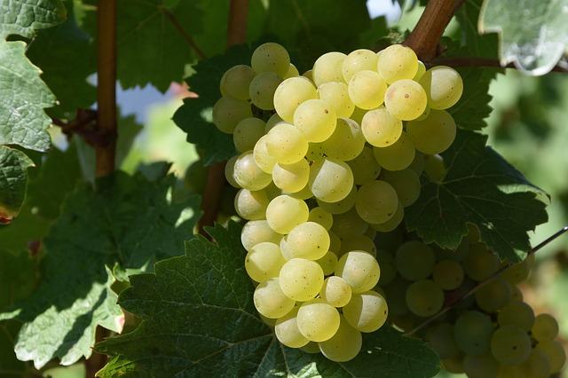 Міжнародний день білого вина «Совіньон Блан» (International Sauvignon Blanc Day)