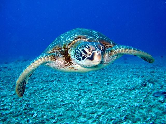Международный день морской черепахи
