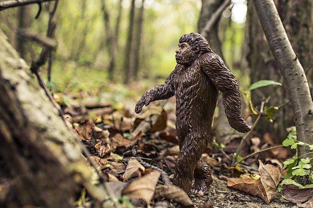 День эволюции (Evolution Day)