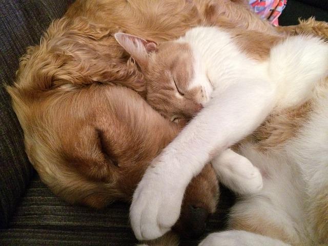 Всесвітній день домашніх тварин (World Pets Day)