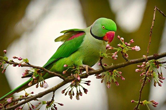 Всесвітній день папуг